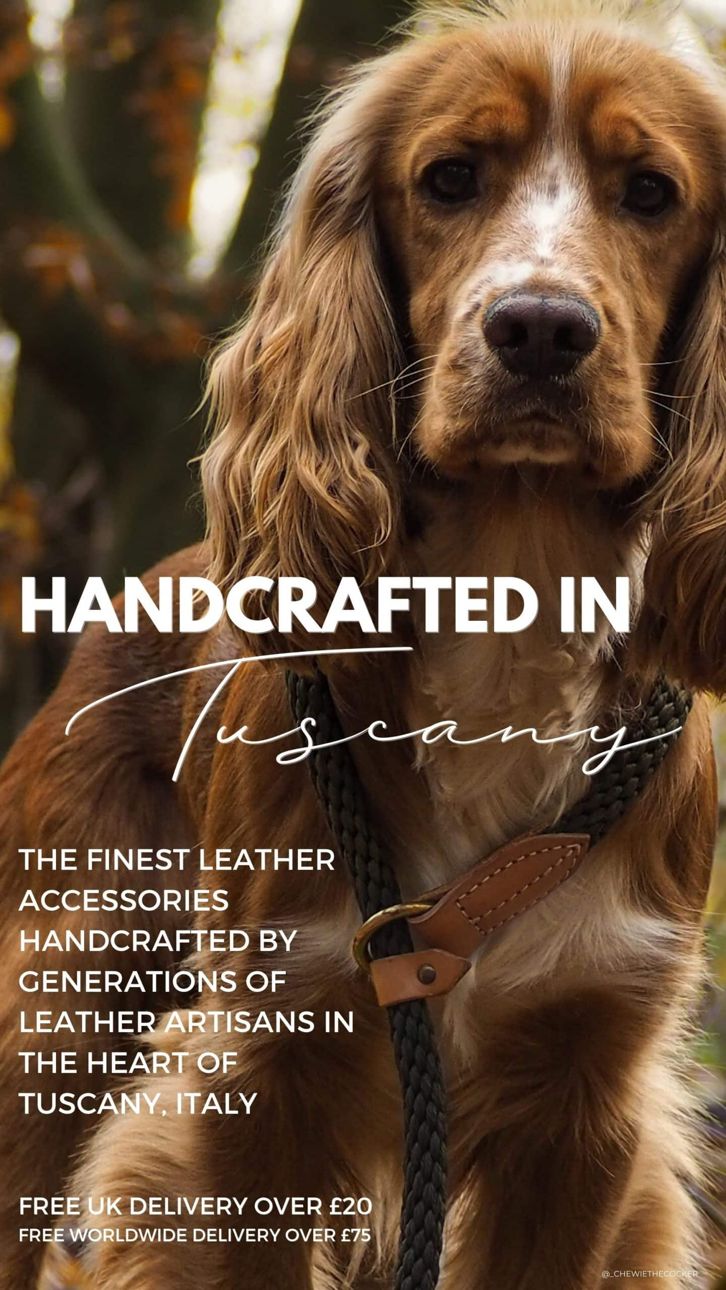 Rope Dog Lead Mobile Homepage Banner