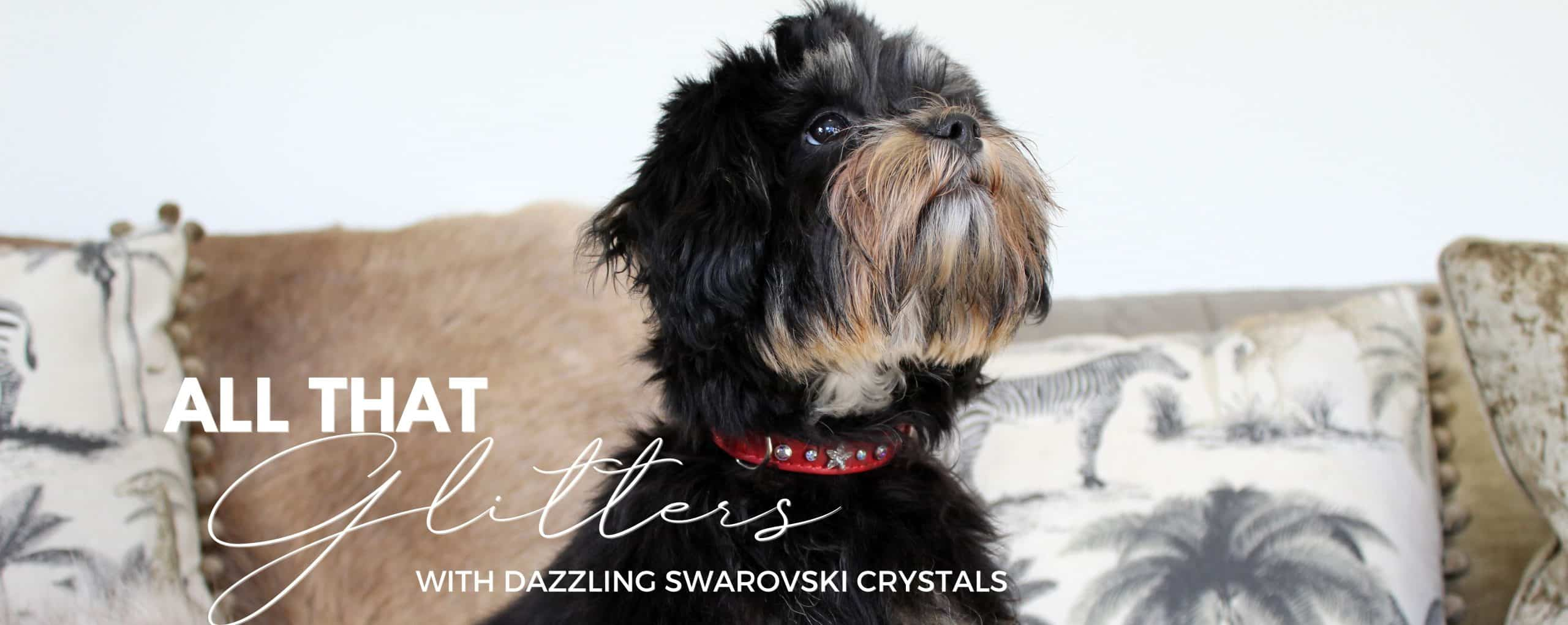 Dog Collar Swarovski Crystals Home Page Banner