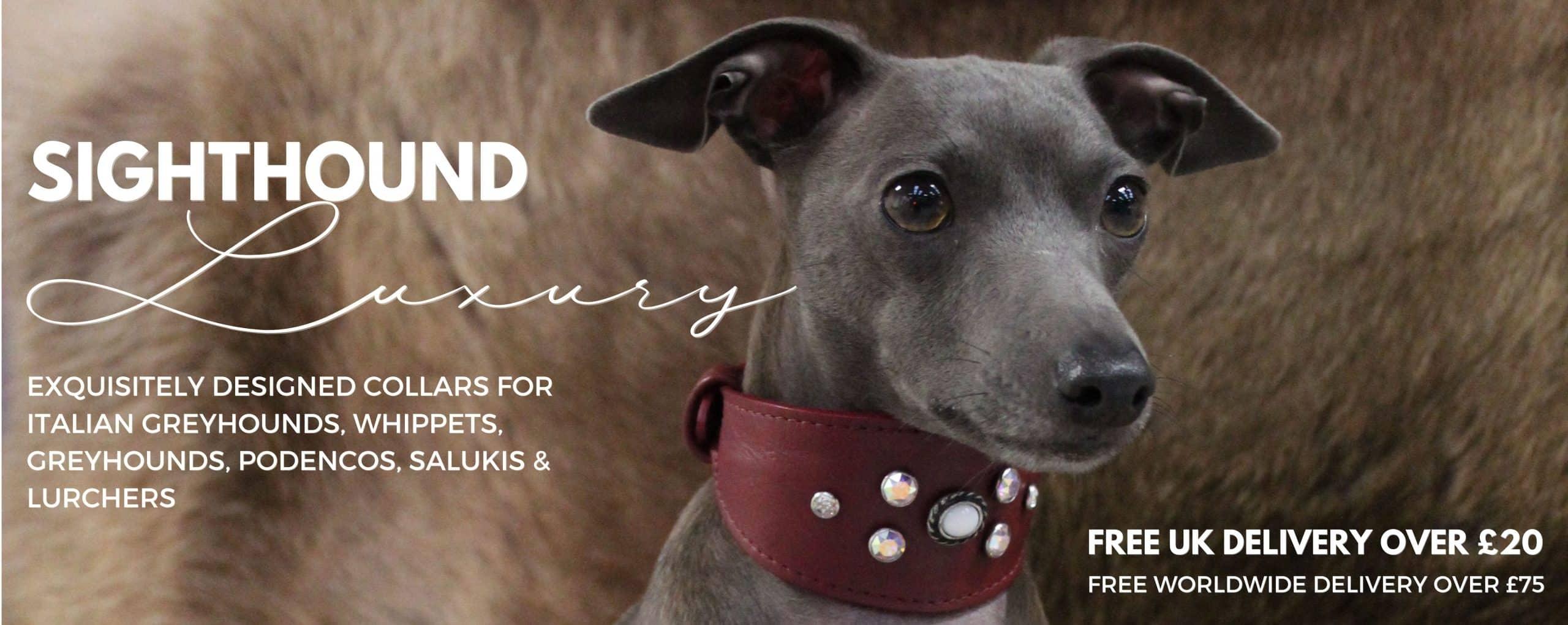 Greyhound Dog Collar Home Page Banner
