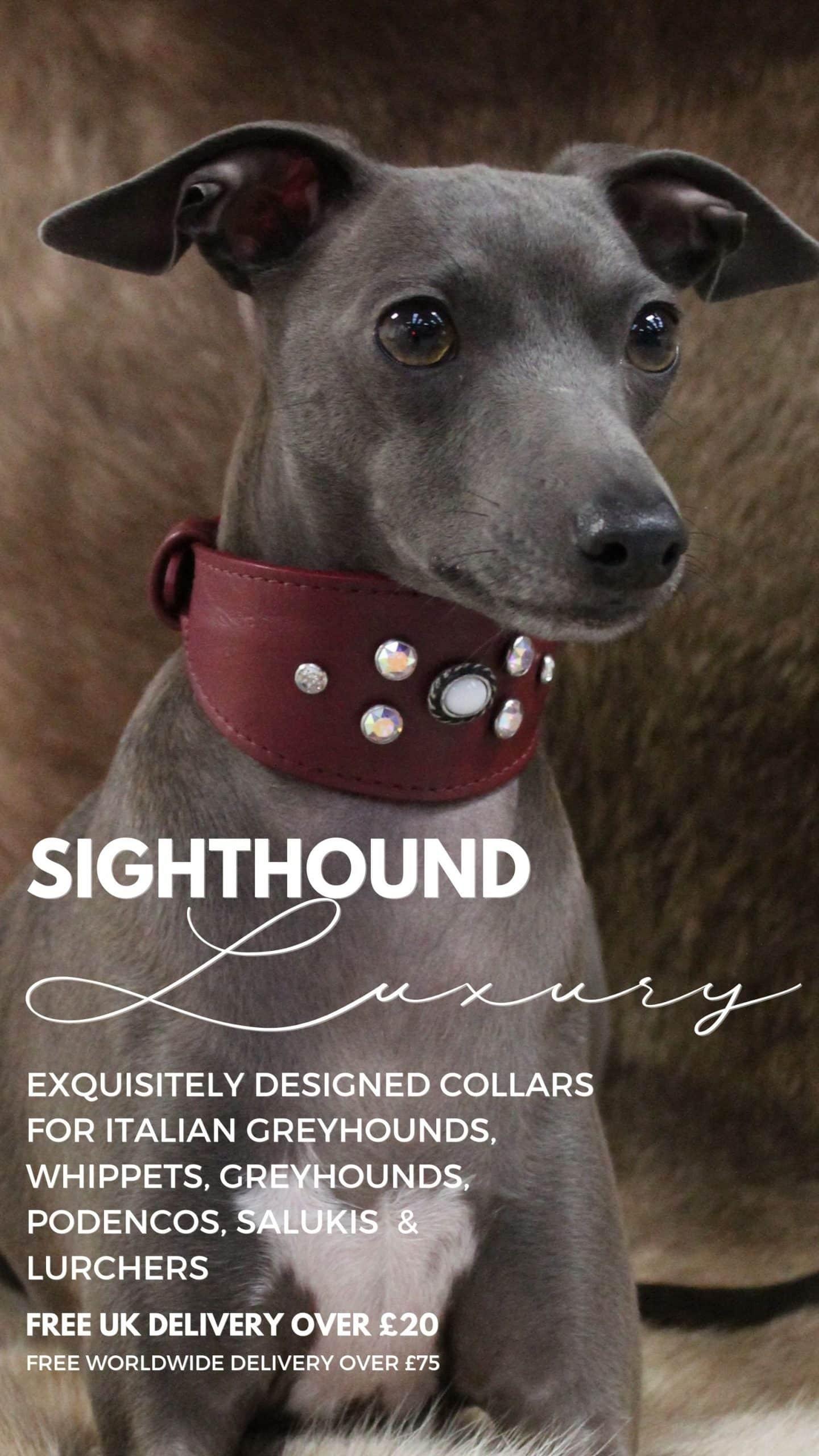 Greyhound Dog Collar Mobile Homepage Banner